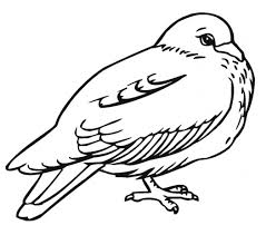 free printable pigeon coloring pages kids