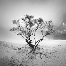 sparse tree by hengki24 on deviantart