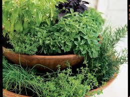 Herb Container Garden - southern california march garden checklist sunset