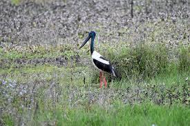 rocky creek dam lismore lake birds in backyards