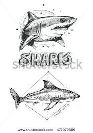 shark sketch vector illustration stock vector 471972689 shutterstock
