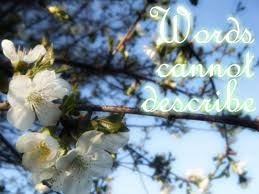 cherry flowers wallpapers flowers indescribable beautiful white cherry blossom tree glow