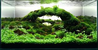 aquascaping layouts with stone and driftwood aquascaping layouts gallery tropical fish and appartment aquascaping