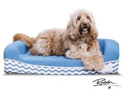 Tough Dog Bed The World U0027s Best Dog Bed By Ralph U0026 Co Indiegogo