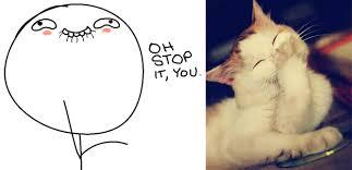 Meme Oh Stop It You - stop it you cat meme