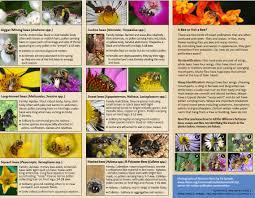 illinois native plant guide native pollinator conservation saint louis zoo