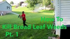 backyard lawn 1st application weed killer ortho weed b gone youtube