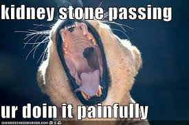 Kidney Stones Meme - chapter 8 homeostasis the kidney ms jmo s biology hivespace
