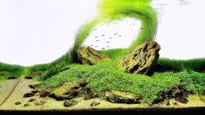 membuat aquascape bening hal yang dilakukan untuk aquascape dunia air