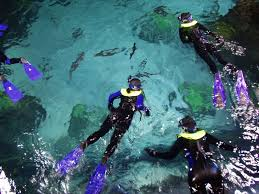 Colorado snorkeling images In the news dive the downtown aquarium with a 1 scuba jpg