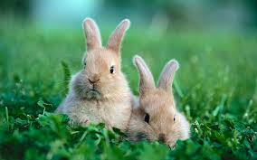 rabbit bunny rabbit names the ultimate guide to popular rabbit names and ideas