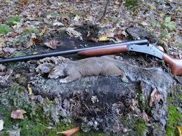 squirrel hunting gun and game the friendliest gun discussion