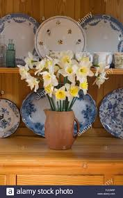 vase of daffodils u0027ice follies u0027 on a country kitchen dresser with