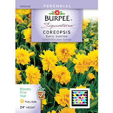 flower seed packets shop burpee coreopsis flower seed packet at lowes