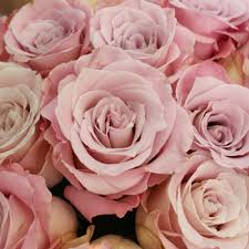 roses wholesale wholesale lavender roses
