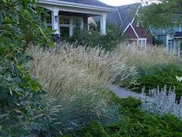 ornamental grass out front
