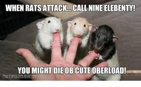 Rat Meme - when rats attackcall nine elebenty you might dieobcuteoberload