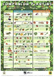 garden tower project companion planting guide