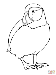 atlatntic puffin coloring page free printable coloring pages