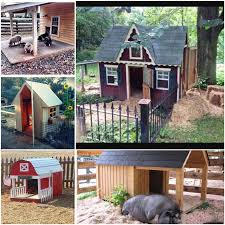 building for the outdoor pig pet pig education