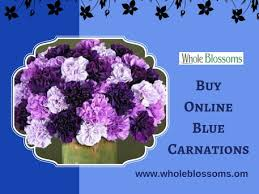 blue carnations usd 144 order blue carnations in bulk united states