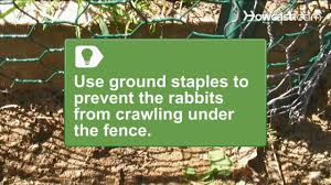 Deer Proof Fence For Vegetable Garden How To Install A Rabbit Proof Fence Youtube