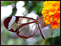 Butterfly Flower Beautiful And Colorful Butterfly Coloring Pages And Pictures