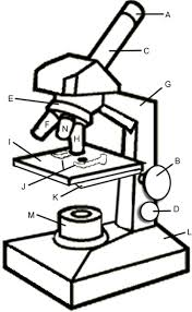 microscope drawing clipart panda free clipart images