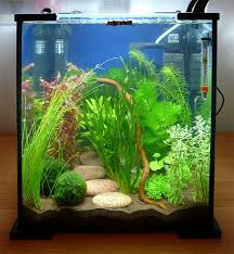 25 Cool Betta Fish Tank Ideas That Will Inspire You meowlogy
