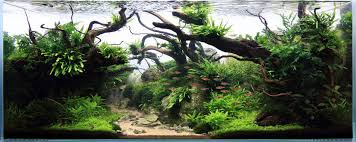 Best Substrate For Aquascaping Easiest Freshwater Plants For Beginners Aquarium Info