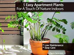 apartment plants 5 easy apartment plants for a touch of nature indoors