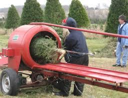 pesticide free christmas trees in illinois ben u0027s christmas tree