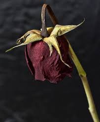 dead rose for keesha kimble phine art design and