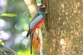 belize ag report backyard birding in belize