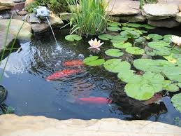 simple landscaping ideas minnesota with fish pond for minimalist