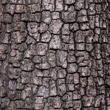 wood tree texture background bark pattern stock image