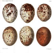 animal u2013 eggs and nests vintage printable at swivelchair media