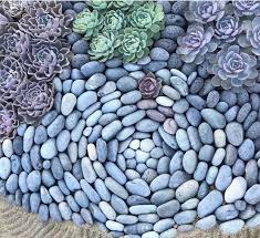 Succulent Rock Garden Beautiful Rock Pattern With Succulents The Of Gardening