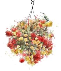 Best Plants For Hanging Baskets by 10 Of The Best Plants For Hanging Baskets Birstall Garden U0026 Leisure