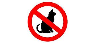 répulsif pour canapé répulsif pour les chats remèdes de grand mère