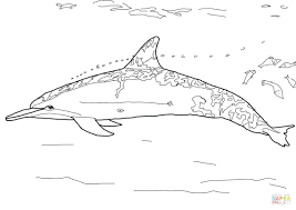 dolphin coloring pages pdf dolphin coloring pages pdf odd dolphins free for adults spinner page