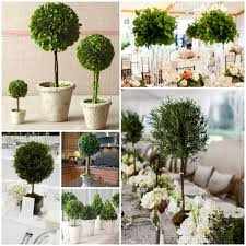 Topiaries Wedding - 77 best non floral centerpieces images on pinterest non floral