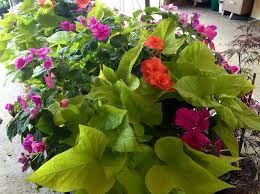 Nursery Plant Supplies by Nursery Products U0026 Landscape Supplier Spokane Valley Wa