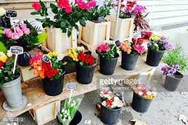 Flowers For Sale Multi Colored Flowers For Sale In Market Stock Photo Getty Images
