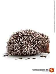 Bc Wildfire Prevention by Volunteer Wildfire Services Match Hedgehog Ads Of The World
