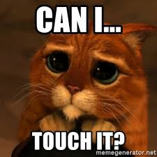 Can I Touch It Meme - can i touch it shrek cat v1 meme generator
