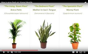 Best Plants For Living Room Best Plants For O2 Air Quality U0026 Air Purification Fitness U0026 Mma