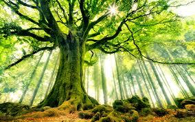 beautiful strange tree hd wallpapers