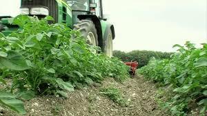 chambre d agriculture du pas de calais le désherbage mécanique ou alternatif de la pomme de terre episode
