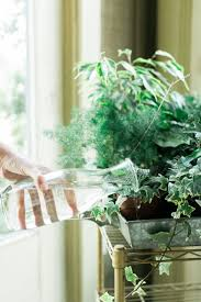 15 best indoor plants that clean the air images on pinterest